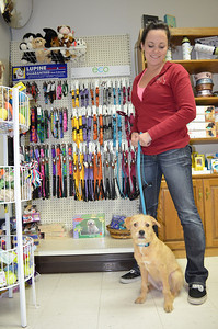 See our new Lupine Eco leashes and collars for all sizes of dogs! Cat collars, too!